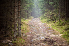 Forest Path (Katka S.) Tags: road park trees mist mountains tree nature forest way path dirt national mysterious stroll bohemian umava