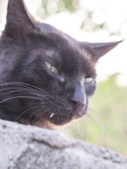 P4085772 (daisuke1230) Tags: cat olympus neko em  m43