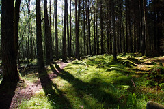 Woodland Light (steve_whitmarsh) Tags: wood trees nature forest scotland aberdeenshire scolyhill