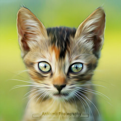 Kitten | Oil Painting (AnNamir™ c[_]) Tags: cute canon getty tamron oilpainting sp90 annamir 5dmk3