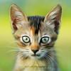 Kitten | Oil Painting (AnNamir™ c[_]) Tags: cute canon getty tamron oilpainting sp90 annamir 5dmk3