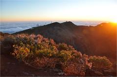 Sunrise at the Roque de Los Muchachos | 8 (elena_n) Tags: sunlight mountains sunrise island lapalma