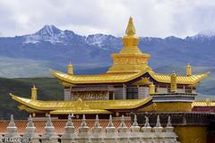 Tagong (renan4) Tags: sichuan tibet china tibetan seda sertr monastery temple larung buddhistacademy buddhaschool tagong buddha red asia trip travel nikon d800 renan4 renan gicquel