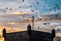 topi volanti (io.robin) Tags: tramonto nuvole torre cielo marocco colori moroco essaouira gabbiani torri torricostiere torresdevigia torrescosteras