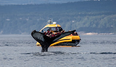 Whale (10 von 19) (karstenniehues) Tags: sea canada st whale lorenz wal whalewatching tadoussac kanada sugetier blauwal finnwal minkwal