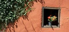 villaverde (Roger S 09) Tags: ventana pared flor asturias villaviciosa hiedra rutadelosmolinos
