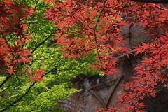 (nobuflickr) Tags: autumn nature japan autumncolors         nanzenjitemplekyoto 20160526p1060418