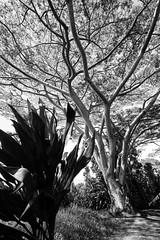 IMG_0088.jpg (Michele Stocco) Tags: hawaii gardenofeden 2016 mauiroadtohana