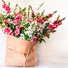 Paper Bag with Flowers (ocanannain) Tags: flowers bag paper sack paperbag papersack s2f kimklassen s2fclass