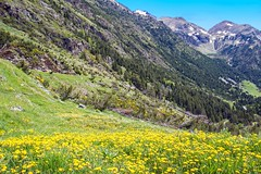 Three Valleys Ride (werner boehm *) Tags: flowers mountains landscape spain catalonia wernerboehm