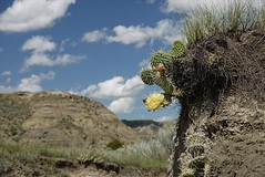resized-P1060783 (griffinb291) Tags: montana badlands makshika