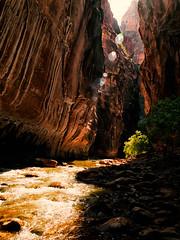 The Narrows (Garen M.) Tags: friends water canyon hike zion zionnationalpark thenarrows olympusomdem1 zuikopro714mmf28