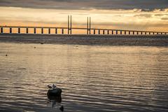 The Bridge (Infomastern) Tags: bridge sunset sea water bro malmö vatten hav solnedgång sibbarp öresundsbron