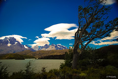 Viejo roble del camino, tus hojas siempre se agitan algo (.KiLTRo.) Tags: torresdepaine regindemagallanesydelaan chile regindemagallanesydelaantrticachilena kiltro torresdelpaine nationalpark lake paine mountain andes patagonia water clouds sky