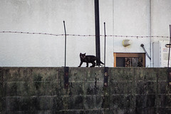Today's Cat@2016-07-07 (masatsu) Tags: cat pentax catspotting mx1 thebiggestgroupwithonlycats