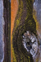 just some planks of wood (cskk) Tags: wood red orange brown yellow grey shed lichen plank hardwood