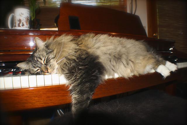 Sasha practicing… sleeping…!