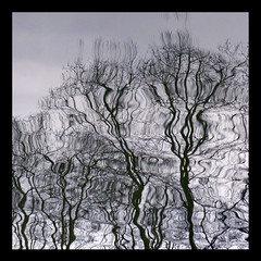 Reflets-2013-04 (Coquelet) Tags: trees reflections pages arbre reflets formes flaques photosperso