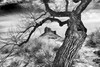 Gnarly (Jeff Clow) Tags: tree nature landscape utah moab theriverroad tpslandscape