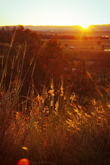 Warmth (Fear_Through_The_Eyes) Tags: morning colour grass rural sunrise landscape lookout walkabout queensland blinkagain