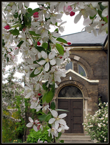 Church Blossoms