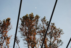 * (kierarenz) Tags: trees moon diagonal