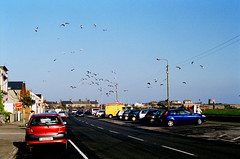 skerries, co.dublin (Mark Waldron) Tags: ireland dublin seagulls film 35mm 50mm nikon fuji superia f14 negative f2 skerries