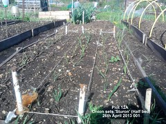 Plot 12A - Onion sets 'Sturon' (Half bed) 26-04-2013 001 (Davy1000) Tags: carrots leeks broadbeans onionsets earlypotatoes april2013 plot12a lettucelittlegem halfbed beetrootchioggia potatoesrocket