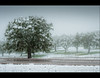 Que manera de nevar! (Javier Martinez de la Ossa) Tags: españa paisajes snow fog spain arboles carretera nieve monesterio espagne niebla extremadura encinas d700 nikond700 bestcapturesaoi elitegalleryaoi mygearandme mygearandmepremium mygearandmebronze mygearandmesilver mygearandmegold javiermartinezdelaossa galleryoffantasticshots flickrsfinestimages1 flickrsfinestimages2 vigilantphotographersunite vpu2 vpu3 vpu4 vpu5 vpu6 vpu7