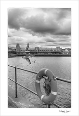 the flight (Maddie Digital) Tags: birds river mersey wirral newbrighton