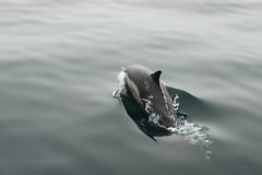 Taking a Breath (Ant_Man1120) Tags: ocean cruise fish beach water canon mammal eos rebel boat ship dolphin newport whale 550d t1i