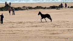 Pembrokeshire June 2013 - 179 - Broad Haven (marmaset) Tags: beach rural village angle pembrokeshire pembs