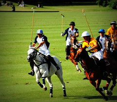 117th Hurlingham Club Open Championship, Argentina / 117 Abierto de Hurlingham YPF () Tags: travel vacation portrait horse holiday man argentina argentine leather cheval buenosaires nikon boots pony portraiture ba 70300mm polo rtw pferd vacanze tack hest porteos roundtheworld paard triplecrown  polopony globetrotter polomatch  poloclub argentinien  hurlingham equidae onhorseback polofield zonea hurlinghamclub leatherboots worldtraveler  ariannin repblicaargentina laaguada  cambiaso chukkas  argentinidad pologame poloteam ladolfina adolfocambiaso adolfito   d700  zonaa nikond700 chukkers abiertodehurlingham  triplecorona 117thhurlinghamopen hurlinghamopen  chukers tradiciondelpoloargentino