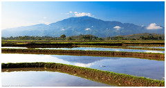 Fertile Plains of Cagayan Valley (4th Life Photography) Tags: travel blue sky food sunlight mountains water landscape asia rice terrace philippines fields production tropic agriculture ricefield plain cagayan isabela nutrition fertile ferileplains
