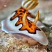 """nudibranch • <a style=""""font-size:0.8em;"""" href=""""http://www.flickr.com/photos/77307500@N08/9612057659/"""" target=""""_blank"""">View on Flickr</a>"""