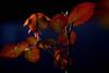 SeptemberRose - The Softness of September (░S░i░l░a░n░d░i░) Tags: life blue red orange plant green love nature rain rose yellow photo leaf transformation heart time spirit progress drop september growth mind soul change rebirth archetype inputoutput 2013 σ renateeichert resilu