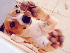 Chip, the crazy dog (I.souza) Tags: sonydscw90
