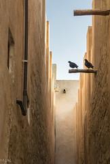 Dubai. Al Bastakiya quarter. (Tiigra) Tags: 2013 dubai animal architecture bird city passage wall wood unitedarabemirates