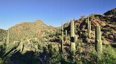 Tucson Mountain Park (BongoInc) Tags: arizona cactus southwest desert tucson saguaro sonorandesert desertlandscape tucsonmountainpark gatespass