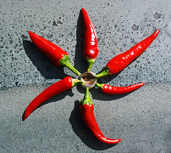 Wheel of fire (Messent) Tags: pictures red england hot pepper poetry haiku chilli poetryandpicturesinternational poetryforall