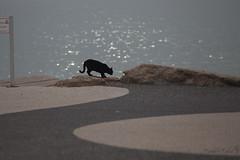 black cat (Tania's Tales) Tags: street city sea cats black water animal backlight cat blackcat mammal feline streetphotography stray          fotografiastradale taniastales