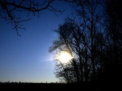 cold moon before winter (frankieleon) Tags: trees winter sky moon cold night stars interestingness interesting bestof cc creativecommons popular nakedtrees frankieleon