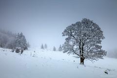 Col des Aravis (dual iso) (Laurent VALENCIA) Tags: road trees winter snow france annecy tourism fog french hiver route valley neige arbre col brouillard chapelle tourisme magiclantern laclusaz aravis hautesavoie manigod croixfry dualiso