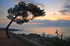 Adoration before the rising sun. (agabarka) Tags: sea sky tree clouds sunrise landscape spain costabrava d90 nikon90