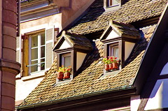 Strasbourg 40 prs de la Cathdrale (paspog) Tags: france strasbourg alsace slates ardoises chienassis