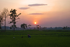 In the Fields (William J H Leonard) Tags: travel nepal sunset portrait people sun colour travelling field clouds rural asian asia colours village rice sundown candid portraiture