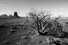 Monument Valley (Jeff Vanneste) Tags: arizona usa utah monumentvalley 2012 étatsunis oljatomonumentvalley