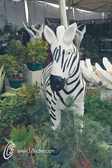 Zebra Statue (fahadee) Tags: show pakistan roses cactus plants shells flower nature colors beauty rose heart coconut small collection karachi clifton 2014 fahadee