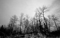 southern skyline.......(explored) (A. Wrench) Tags: trees winter sky bw sun snow cold nature silhouette wisconsin clouds rural forest woods