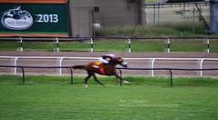 se viene el ganador... (Adri T fotografas) Tags: horse caballo velocidad carrera sanisidro hipdromodesanisidro carreradecaballos